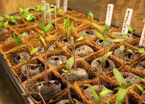 grow-box-031813