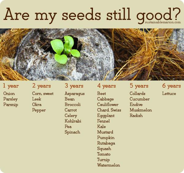 seed-storage-chart